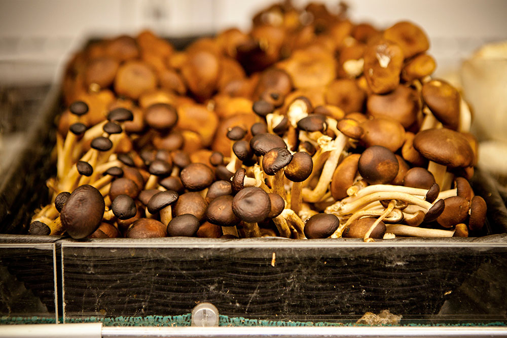 Berkeley Bowl - Mushrooms
