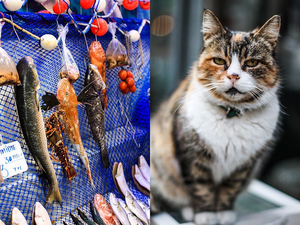 Fish market & Bossy cat