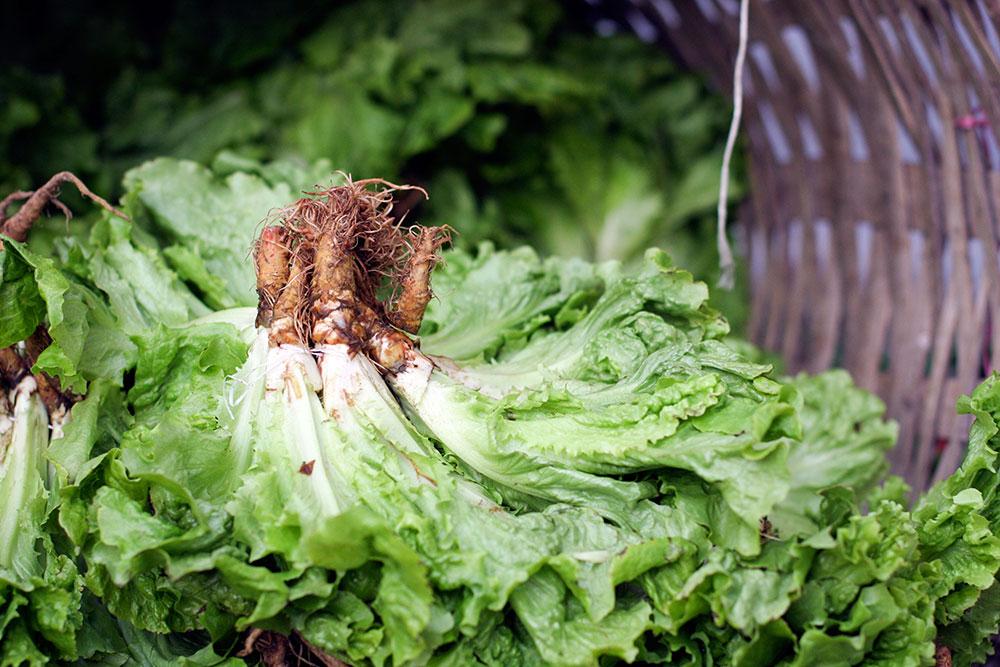 Kasimpasa Kastamonu Food Market 12