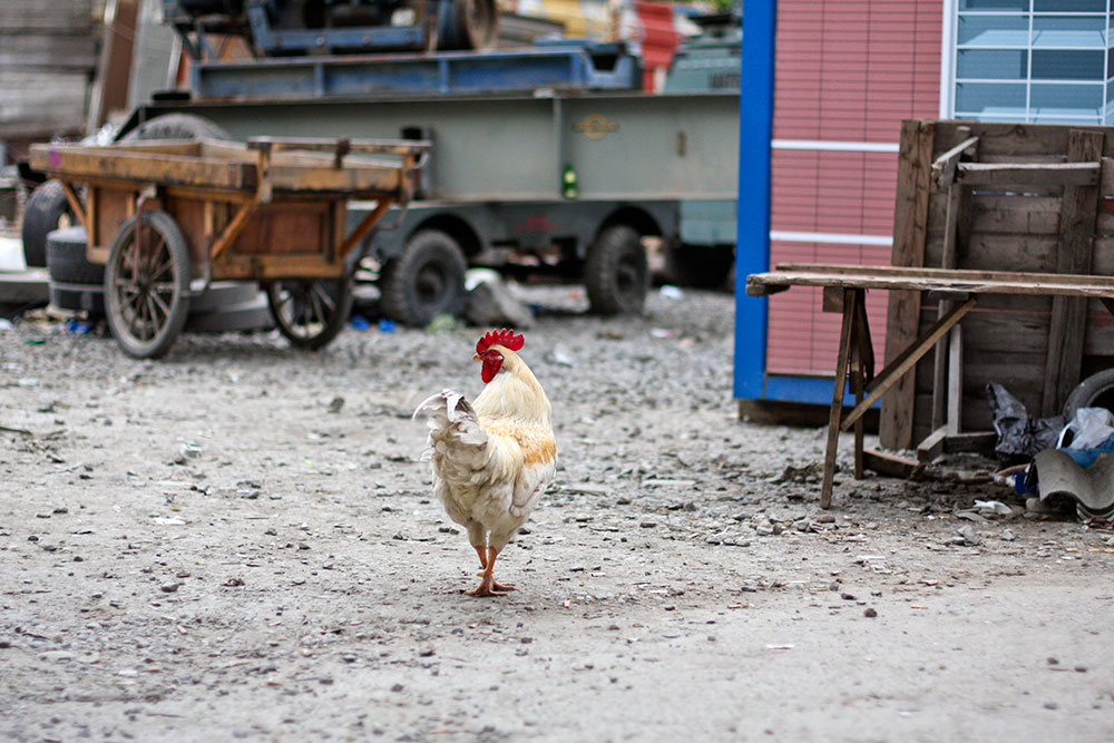 Kasimpasa Kastamonu Food Market 19