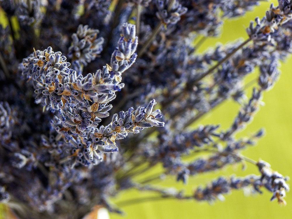 Lavender Creme Brulee 1