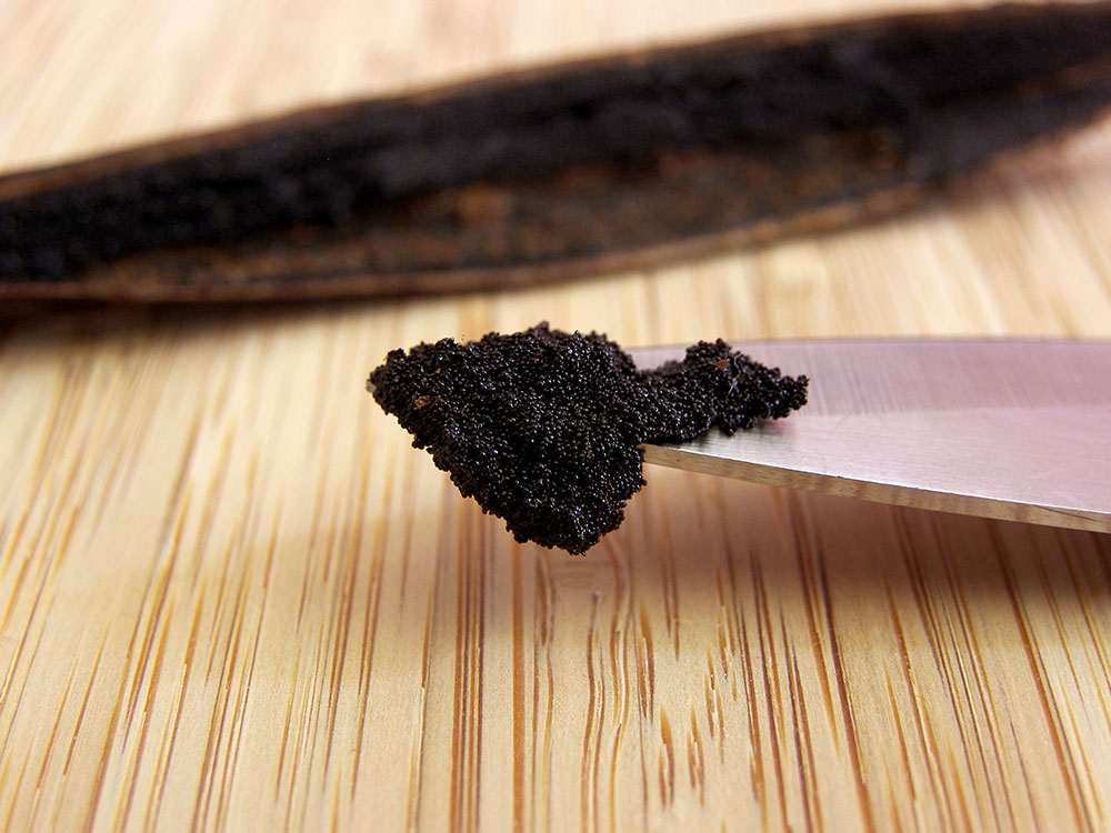 Vanilya Çubuk Tohumları